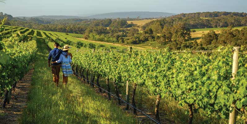 (English) Best of the South West: Margaret River and Beyond